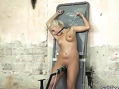 Beautiful sub beauty tiedup and dominated